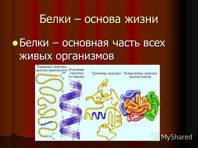 Белки – основа жизни Белки – основная часть всех живых организмов Белки – основная часть всех живых организмов