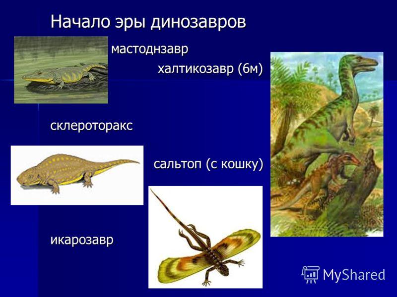 Начало эры динозавров мастоднзавр мастоднзавр халтикозавр (6м) халтикозавр (6м) склероторакс сальтоп (с кошку) сальтоп (с кошку) икарозавр