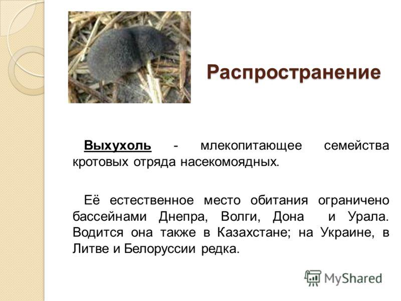 Распространение Распространение Выхухоль - млекопитающее семейства кротовых отряда насекомоядных. Её естественное место обитания ограничено бассейнами Днепра, Волги, Дона и Урала. Водится она также в Казахстане; на Украине, в Литве и Белоруссии редка
