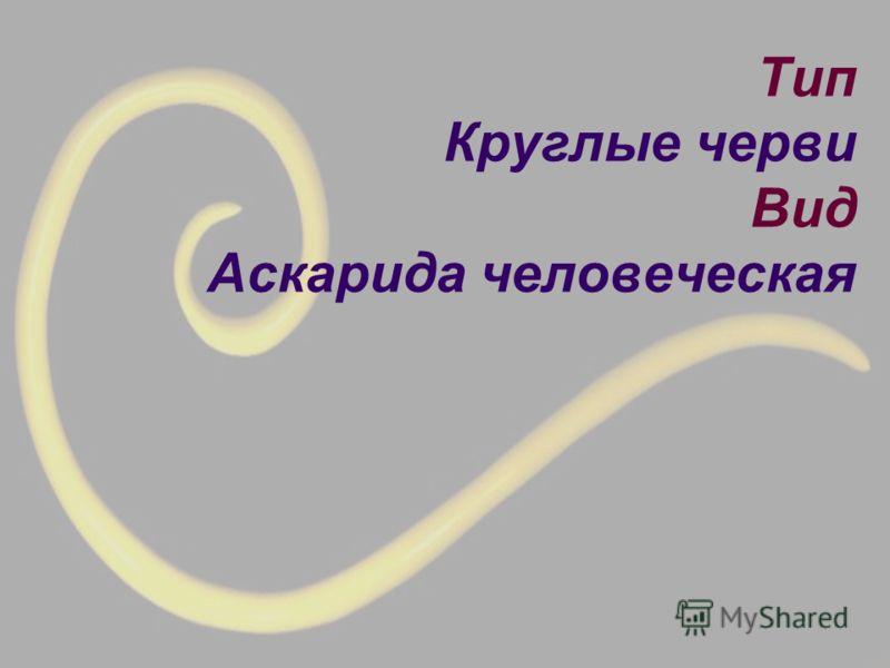 Тип Круглые черви Вид Аскарида человеческая