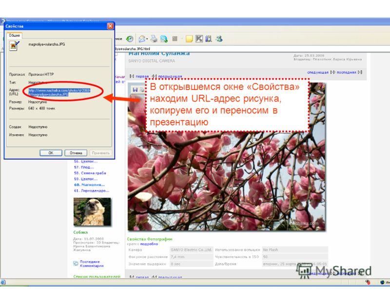 В открывшемся окне «Свойства» находим URL-адрес рисунка, копируем его и переносим в презентацию