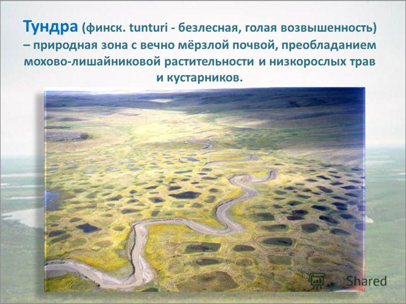 Тундра (финск. tunturi - безлесная, голая возвышенность) – природная зона с вечно мёрзлой почвой, преобладанием мохово-лишайниковой растительности и низкорослых трав и кустарников.