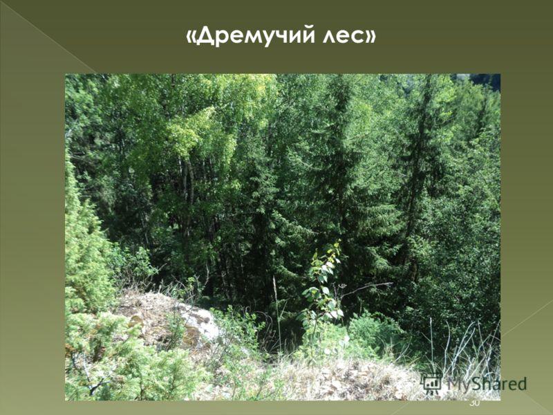 «Дремучий лес» 30