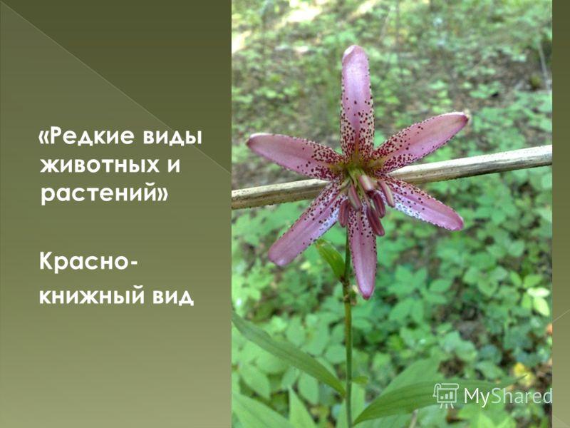47 «Редкие виды животных и растений» Красно- книжный вид
