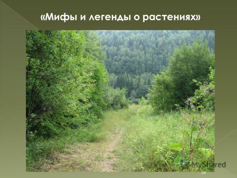 «Мифы и легенды о растениях» 54