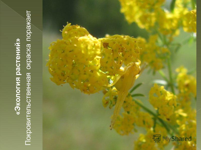 55 «Экология растений» Покровительственная окраска поражает