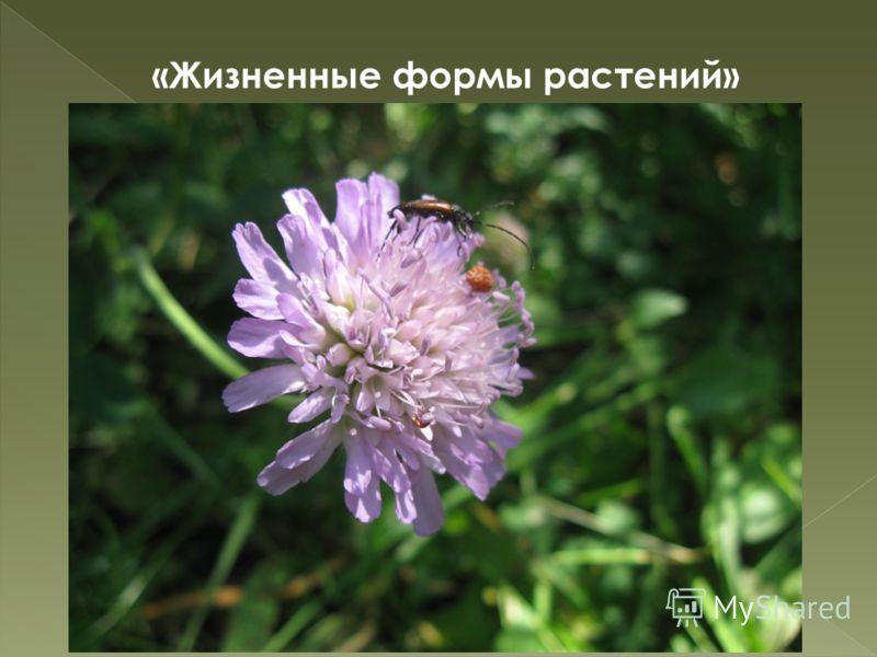 56 «Жизненные формы растений»