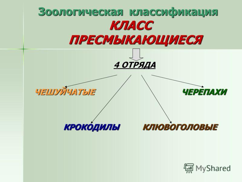 Зоологическая классификация КЛАСС ПРЕСМЫКАЮЩИЕСЯ 4 ОТРЯДА ЧЕШУЙЧАТЫЕ ЧЕРЕПАХИ ЧЕШУЙЧАТЫЕ ЧЕРЕПАХИ КРОКОДИЛЫ КЛЮВОГОЛОВЫЕ КРОКОДИЛЫ КЛЮВОГОЛОВЫЕ
