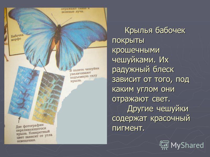 Крылья бабочек покрыты крошечными чешуйками. Их радужный блеск зависит от того, под каким углом они отражают свет. Другие чешуйки содержат красочный пигмент. Крылья бабочек покрыты крошечными чешуйками. Их радужный блеск зависит от того, под каким уг