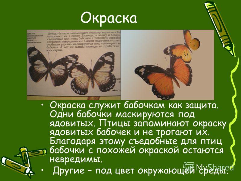 Окраска Окраска служит бабочкам как защита. Одни бабочки маскируются под ядовитых. Птицы запоминают окраску ядовитых бабочек и не трогают их. Благодаря этому съедобные для птиц бабочки с похожей окраской остаются невредимы. Другие – под цвет окружающ