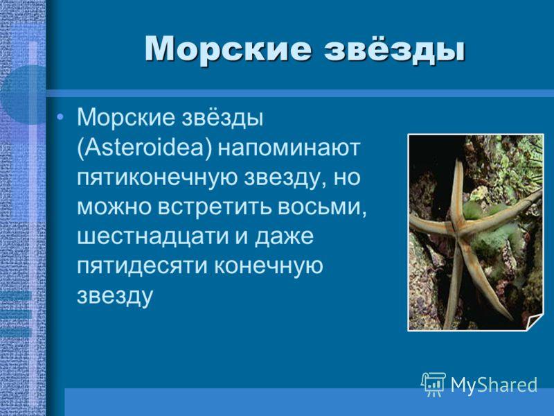 Морские звёзды Морские звёзды (Asteroidea) напоминают пятиконечную звезду, но можно встретить восьми, шестнадцати и даже пятидесяти конечную звезду