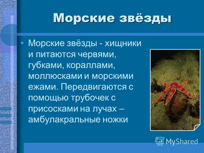 Морские звёзды Морские звёзды - хищники и питаются червями, губками, кораллами, моллюсками и морскими ежами. Передвигаются с помощью трубочек с присосками на лучах – амбулакральные ножки