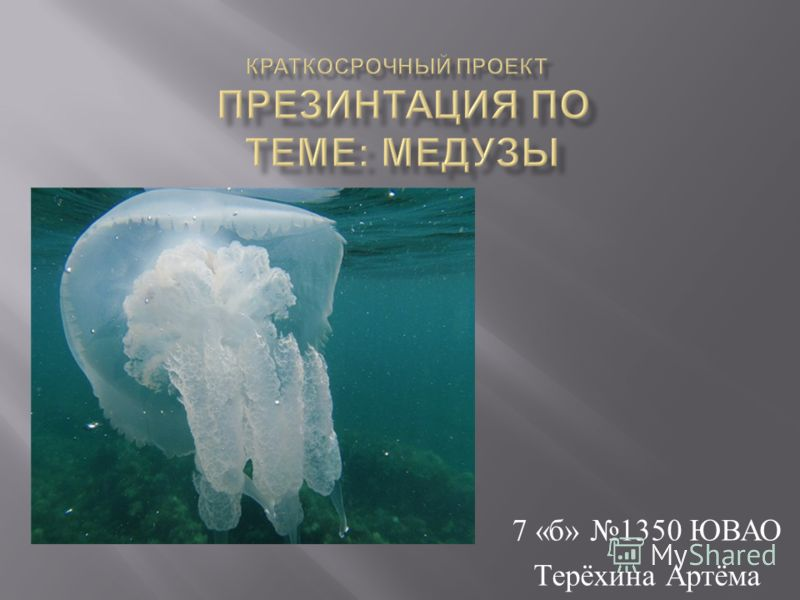 7 « б » 1350 ЮВАО Терёхина Артёма