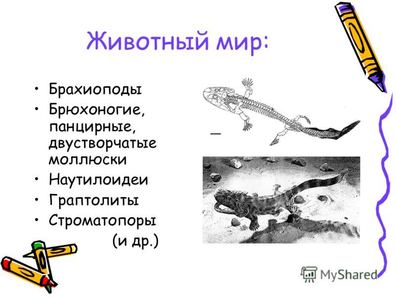 Животный мир: Брахиоподы Брюхоногие, панцирные, двустворчатые моллюски Наутилоидеи Граптолиты Строматопоры (и др.)