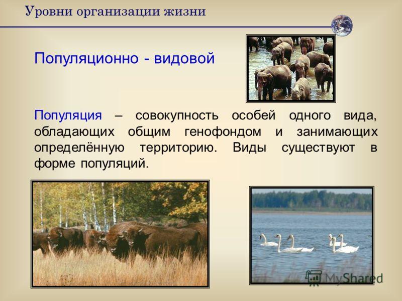 Уровни организации жизни Популяционно - видовой Популяция – совокупность особей одного вида, обладающих общим генофондом и занимающих определённую территорию. Виды существуют в форме популяций.