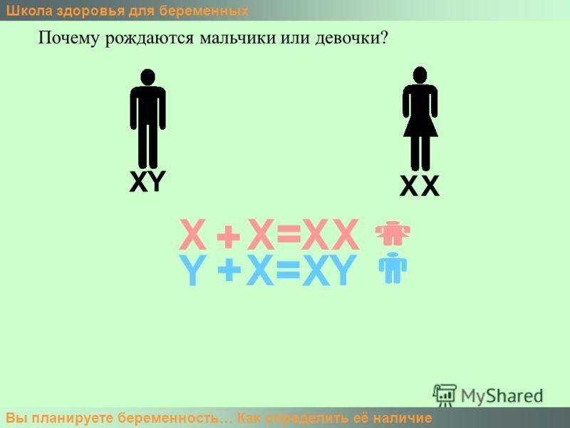 Школа здоровья для беременных Вы планируете беременность… Как определить её наличие Почему рождаются мальчики или девочки? X XX Y X Y X X + + = = X Y XX