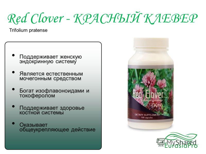 Red Clover - КРАСНЫЙ КЛЕВЕР Trifolium pratense Поддерживает женскую эндокринную систему Является естественным мочегонным средством Богат изофлавоноидами и токоферолом Поддерживает здоровье костной системы Оказывает общеукрепляющее действие