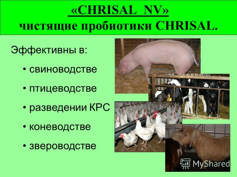 «CHRISAL NV» чистящие пробиотики CHRISAL. Эффективны в: свиноводстве птицеводстве разведении КРС коневодстве звероводстве