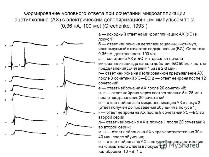 Формирование условного ответа при сочетании микроаппликации ацетилхолина (АХ) с электрическим деполяризационным импульсом тока (0,36 нА, 100 мс) (Grechenko, 1993 ): а исходный ответ на микроаппликацию АХ (УС) в локус 1; б ответ нейрона на деполяризац