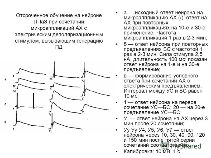 Отсроченное обучение на нейроне ЛПаЗ при сочетании микроаппликаций АХ с электрическим деполяризационным стимулом, вызывающим генерацию ПД а исходный ответ нейрона на микроаппликацию АХ (/), ответ на АХ при повторных микроаппликациях на 10-е и 30-е пр