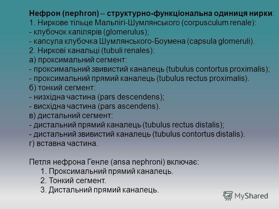 Нефрон (neрhron) – структурно-функціональна одиниця нирки: 1. Ниркове тільце Мальпігі-Шумлянського (corpusculum renale): - клубочок капілярів (glomerulus); - капсула клубочка Шумлянського-Боумена (capsula glomeruli). 2. Ниркові канальці (tubuli renal