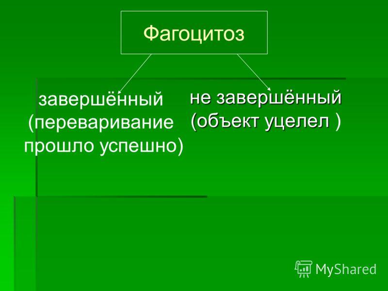 не завершённый (объект уцелел (объект уцелел ) Фагоцитоз завершённый (переваривание прошло успешно)