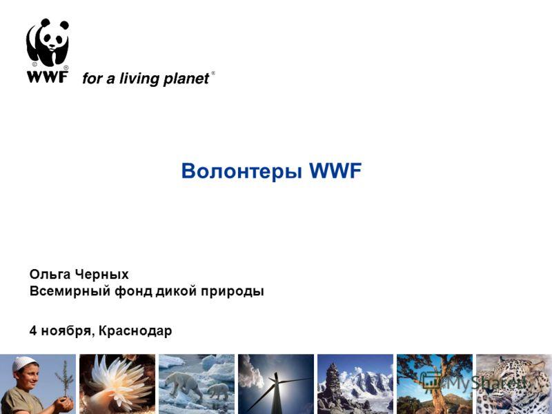 Волонтеры WWF Ольга Черных Всемирный фонд дикой природы 4 ноября, Краснодар