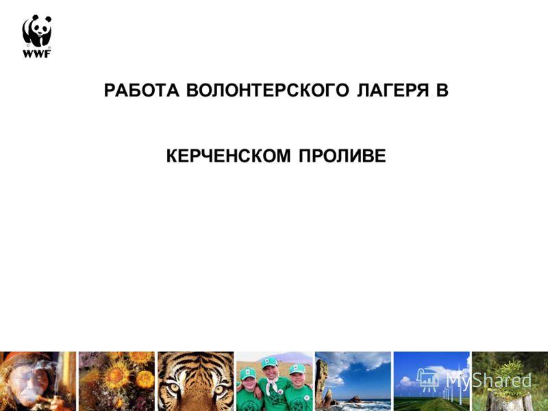 РАБОТА ВОЛОНТЕРСКОГО ЛАГЕРЯ В КЕРЧЕНСКОМ ПРОЛИВЕ