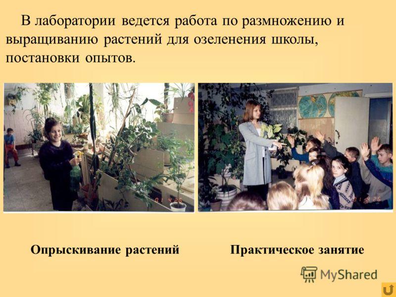 Практическое занятиеОпрыскивание растений В лаборатории ведется работа по размножению и выращиванию растений для озеленения школы, постановки опытов.