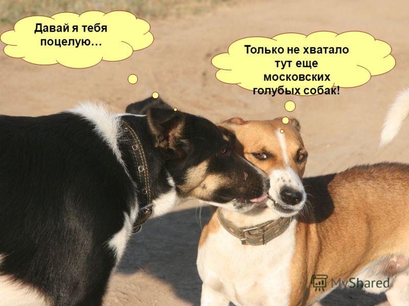 А вот и первая любовь… Давай я тебя поцелую… Только не хватало тут еще московских голубых собак!