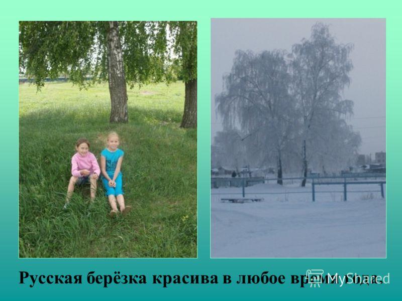 Русская берёзка красива в любое время года.