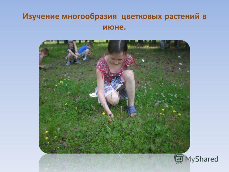 Изучение многообразия цветковых растений в июне.