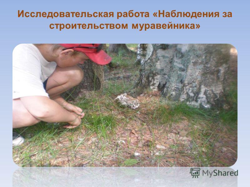 Исследовательская работа «Наблюдения за строительством муравейника»