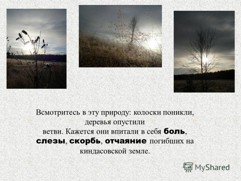 Всмотритесь в эту природу: колоски поникли, деревья опустили ветви. Кажется они впитали в себя боль, слезы, скорбь, отчаяние погибших на киндасовской земле.