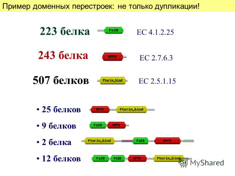 25 белков 9 белков 2 белка 12 белков 223 белка 243 белка 507 белков ЕС 2.5.1.15 ЕС 4.1.2.25 ЕС 2.7.6.3 Пример доменных перестроек: не только дупликации!