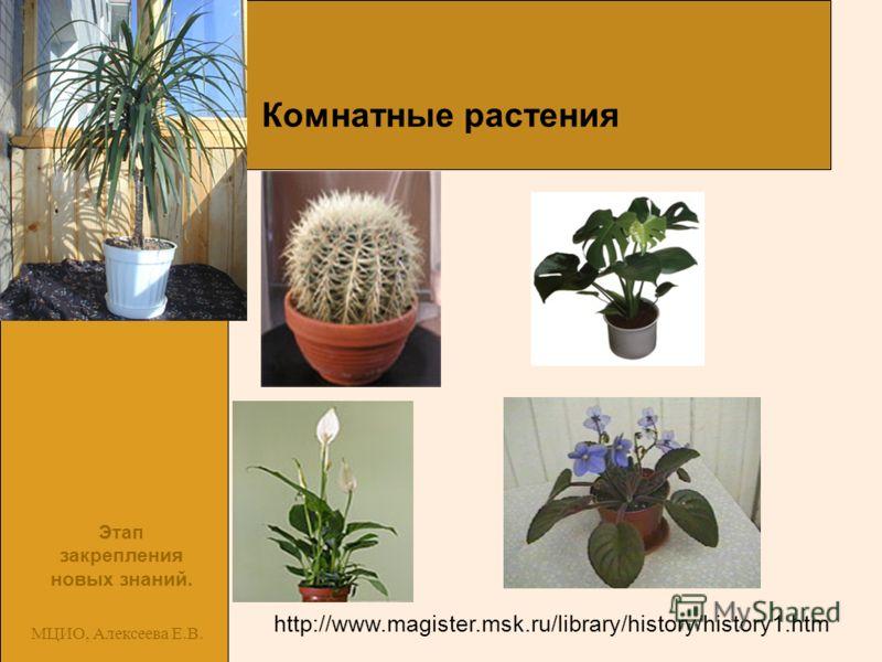 МЦИО, Алексеева Е.В. Комнатные растения http://www.magister.msk.ru/library/history/history1.htm Этап закрепления новых знаний.
