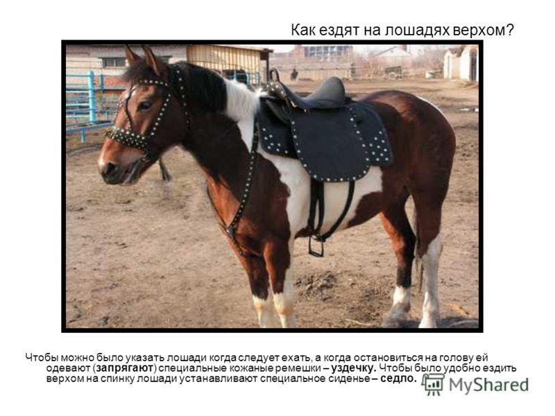 Как ездят на лошадях верхом? Чтобы можно было указать лошади когда следует ехать, а когда остановиться на голову ей одевают (запрягают) специальные кожаные ремешки – уздечку. Чтобы было удобно ездить верхом на спинку лошади устанавливают специальное