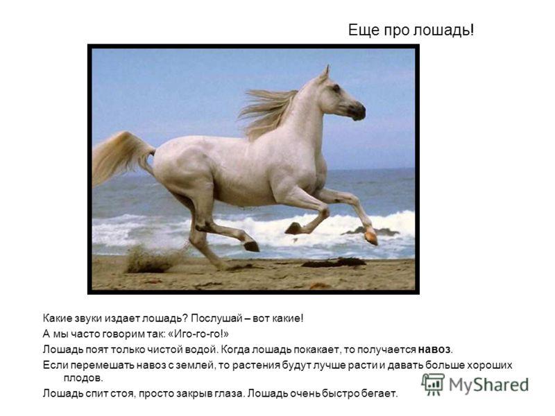 Еще про лошадь! Какие звуки издает лошадь? Послушай – вот какие! А мы часто говорим так: «Иго-го-го!» Лошадь поят только чистой водой. Когда лошадь покакает, то получается навоз. Если перемешать навоз с землей, то растения будут лучше расти и давать