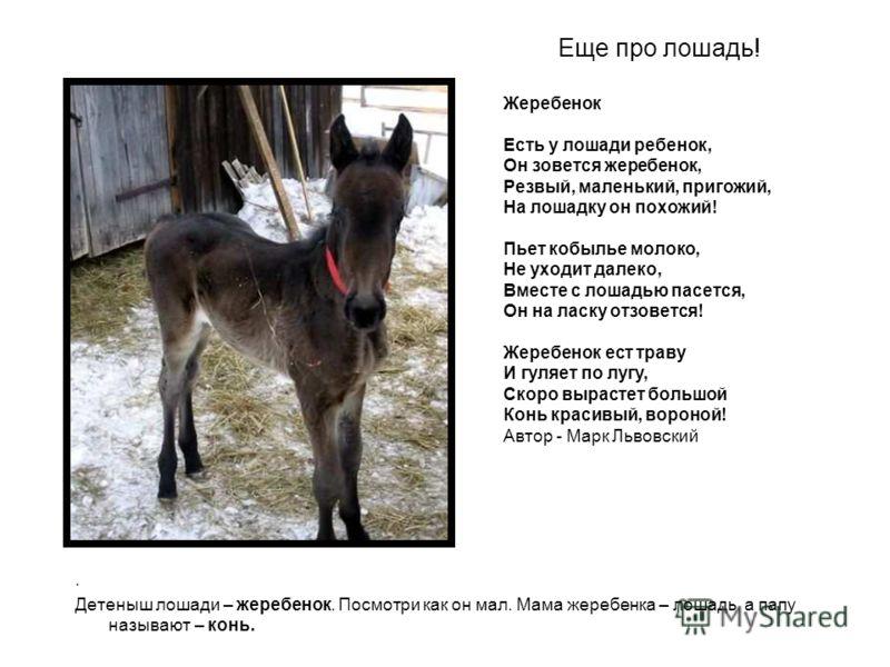 Еще про лошадь!. Детеныш лошади – жеребенок. Посмотри как он мал. Мама жеребенка – лошадь, а папу называют – конь. Жеребенок Есть у лошади ребенок, Он зовется жеребенок, Резвый, маленький, пригожий, На лошадку он похожий! Пьет кобылье молоко, Не уход
