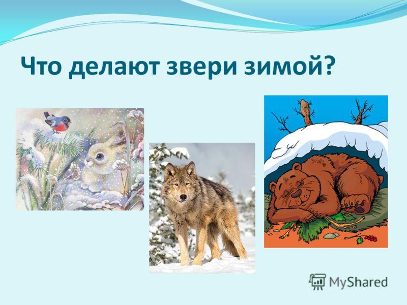 Что делают звери зимой?