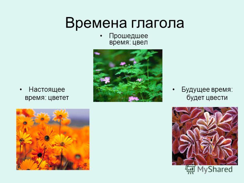 Времена глагола Прошедшее время: цвел Будущее время: будет цвести Настоящее время: цветет