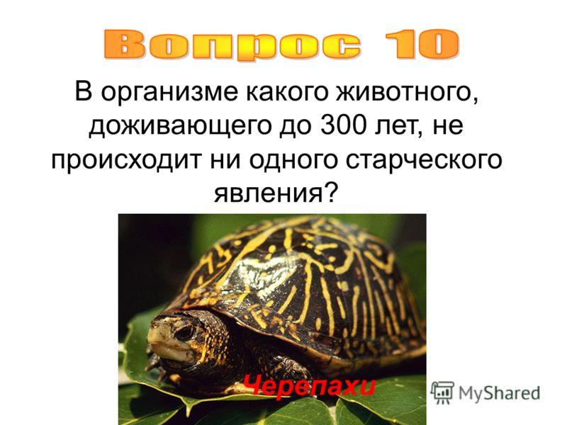В организме какого животного, доживающего до 300 лет, не происходит ни одного старческого явления? Черепахи