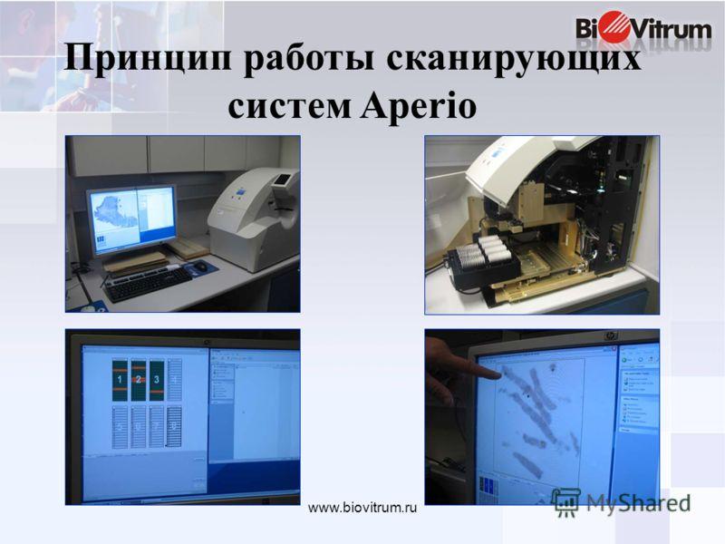 www.biovitrum.ru Принцип работы сканирующих систем Aperio