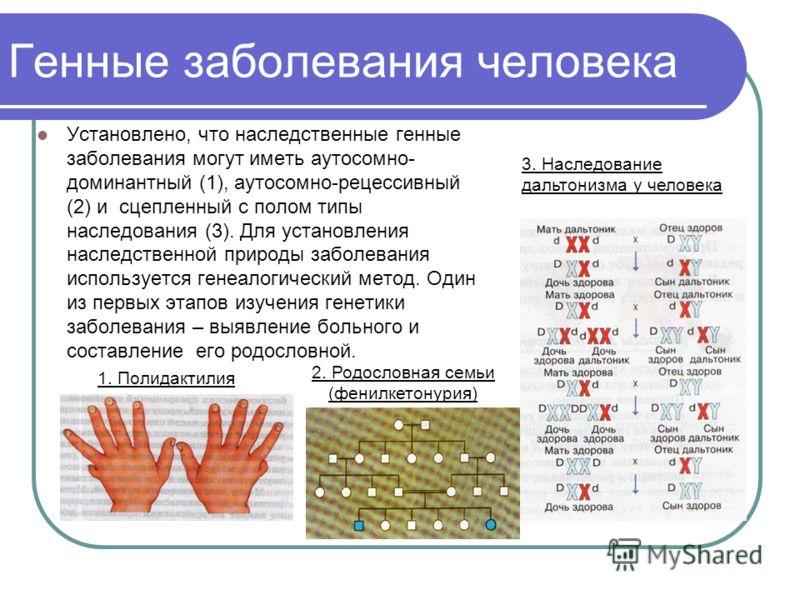 Генные заболевания человека Установлено, что наследственные генные заболевания могут иметь аутосомно- доминантный (1), аутосомно-рецессивный (2) и сцепленный с полом типы наследования (3). Для установления наследственной природы заболевания используе