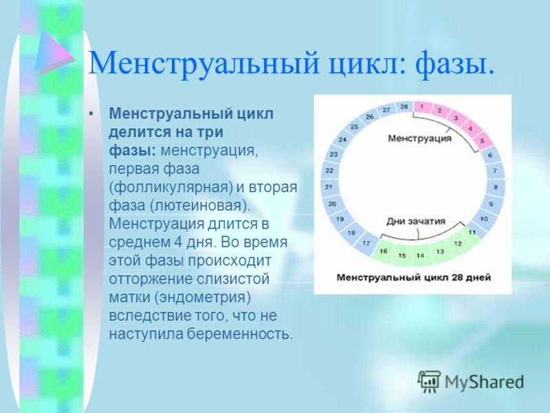 Менструальный цикл: фазы. Менструальный цикл делится на три фазы: менструация, первая фаза (фолликулярная) и вторая фаза (лютеиновая). Менструация длится в среднем 4 дня. Во время этой фазы происходит отторжение слизистой матки (эндометрия) вследстви