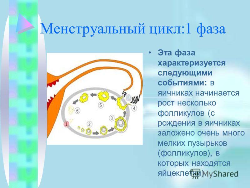 Менструальный цикл:1 фаза Эта фаза характеризуется следующими событиями: в яичниках начинается рост несколько фолликулов (с рождения в яичниках заложено очень много мелких пузырьков (фолликулов), в которых находятся яйцеклетки).