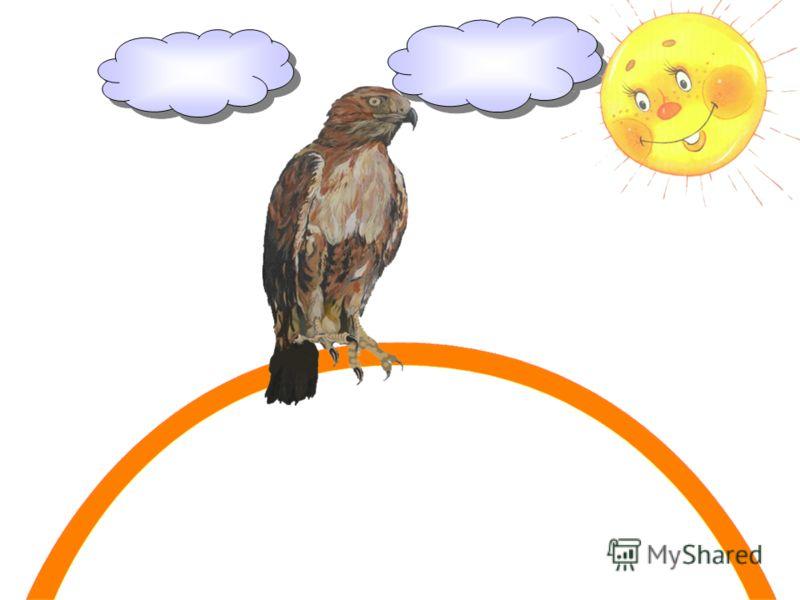 Орёл, летая среди скал, Оранжевую ленту взял;