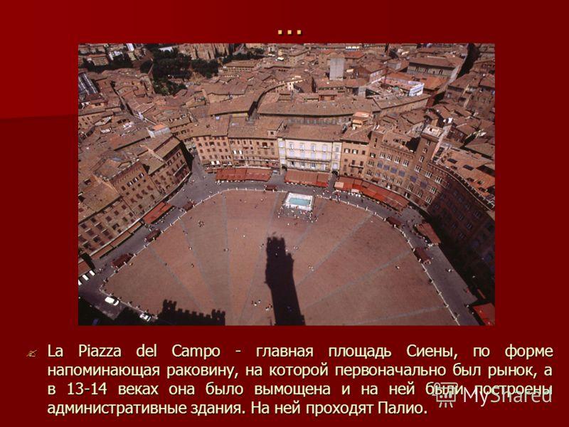 … La Piazza del Campo - главная площадь Сиены, по форме напоминающая раковину, на которой первоначально был рынок, а в 13-14 веках она было вымощена и на ней были построены административные здания. На ней проходят Палио. La Piazza del Campo - главная