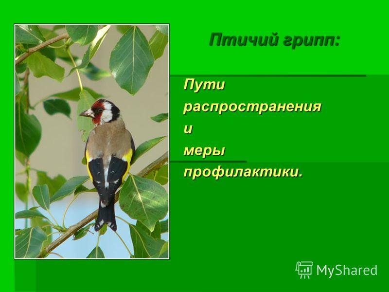 Птичий грипп: Птичий грипп:Путираспространенияимерыпрофилактики.