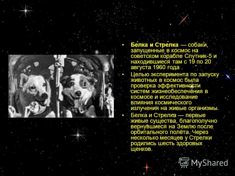 Бе́лка и Стре́лка собаки, запущенные в космос на советском корабле Спутник-5 и находившиеся там с 19 по 20 августа 1960 года. Целью эксперимента по запуску животных в космос была проверка эффективности систем жизнеобеспечения в космосе и исследование
